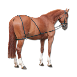 Combi Trainer Paard