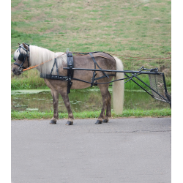 Enkelspantuig Pony of Shet